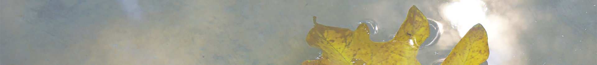 cropped-floatingleaf.header-1.png